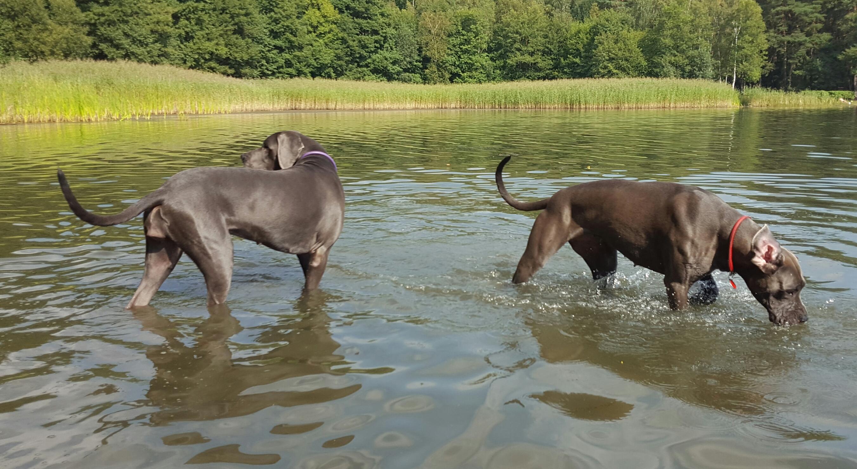 Pilsen, Baden im See